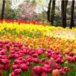 ヴィレッジ花園イメージ