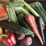 やんばるで採れた野菜たち