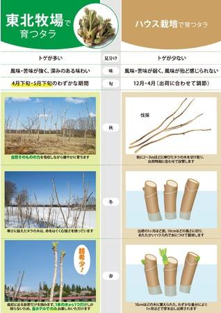 東北牧場のタラの芽と一般的なタラの芽の違い