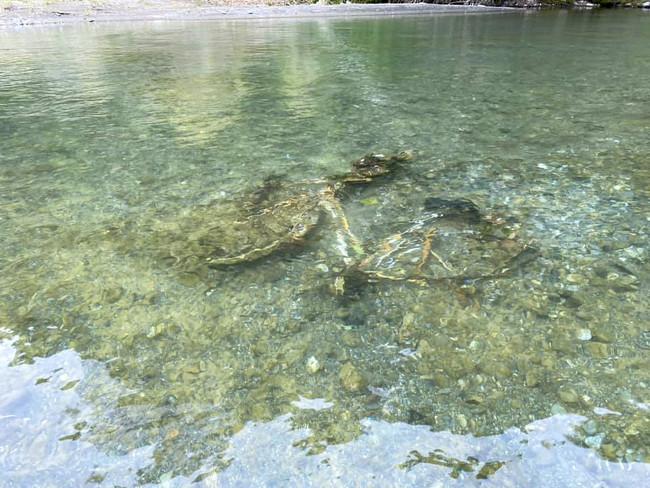 川底には自転車などの大きなゴミも散見されます